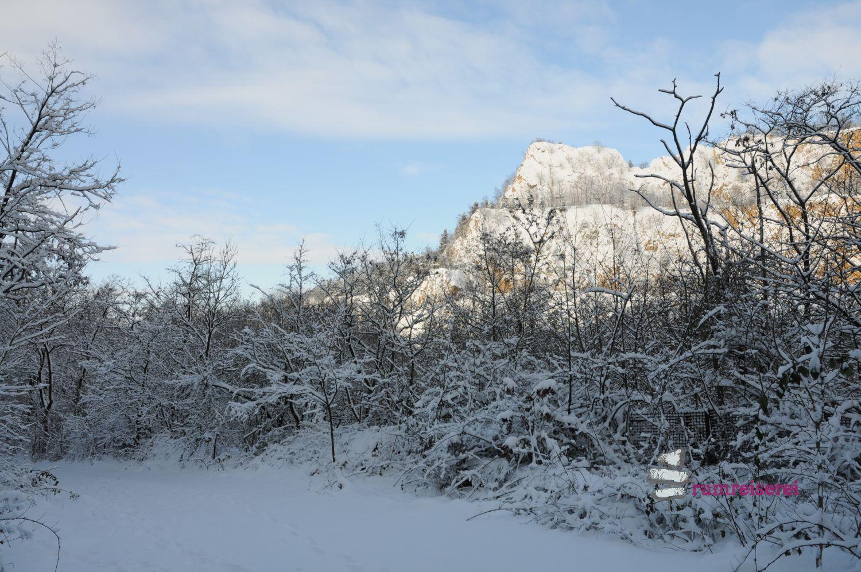 winterwanderung-heidelberg003