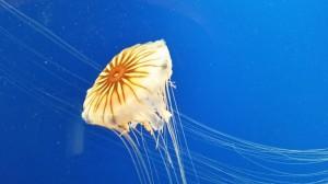 aquarium-qualle-20140908_135619