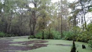 In der üppingen Vegetation des Pearl River